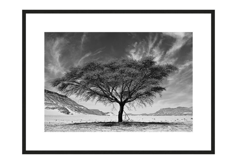 Resilience I with frame, Desert Stories Series (Photo Edition), Nik Barte