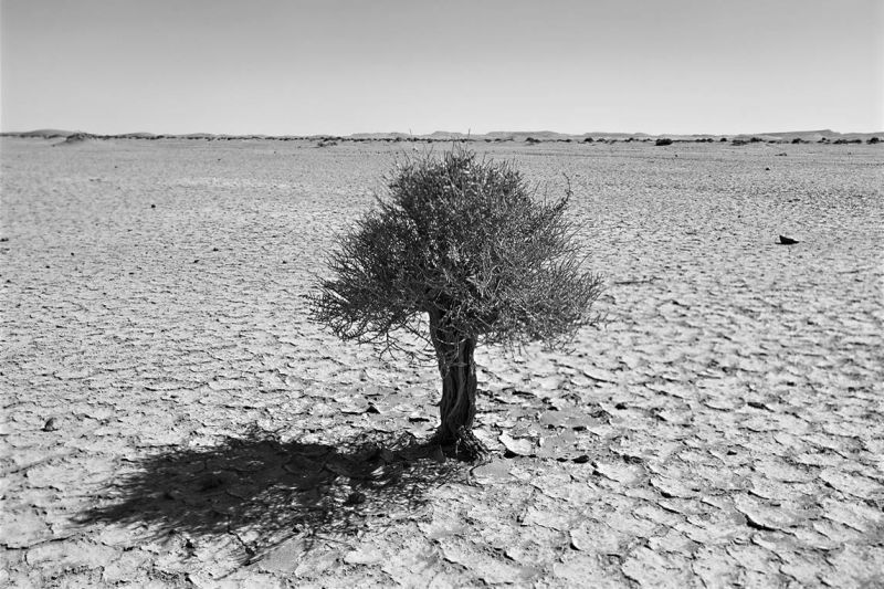 Spirit of Perseverance, Desert Stories Series (Photo Edition), Nik Barte