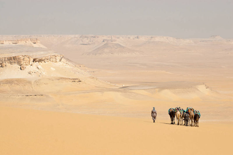 Expedition in Abu Muharrik by Camel, Egypt, Sahara