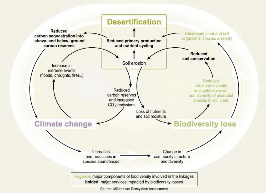 Linkages between Desertification, Global Climate Change, and Biodiversity Loss (from: Millenium Ecosystem Assessment, 2005)