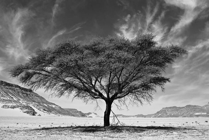 DESERT STORIES - ARTWORKS AVAILABLE IN PHOTO EDITION - NIKBARTE - RESILIENCE